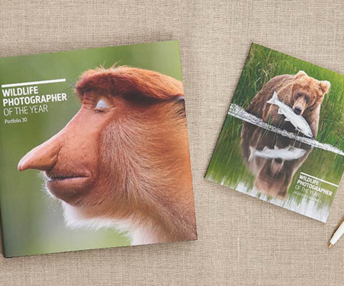 Front cover images of books to accompany the Wildlife Photographer of the Year exhibition showing brown bear with a fish in its mouth and long-nosed primate.